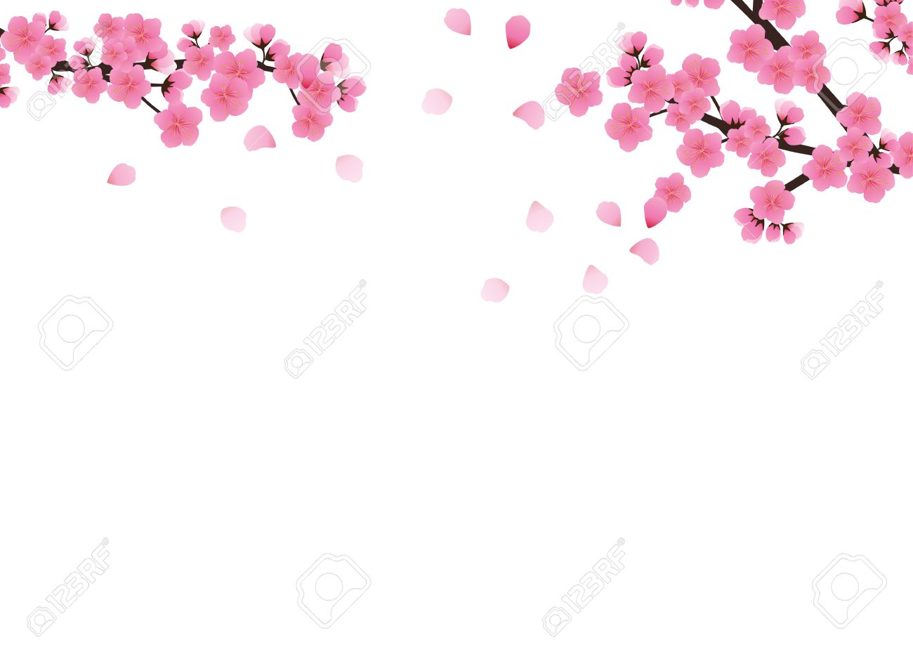 Cherry blossom flowers background sakura pink flowers background cherry blossom flowers background sakura pink flowers background stock vector 75146174 mightylinksfo