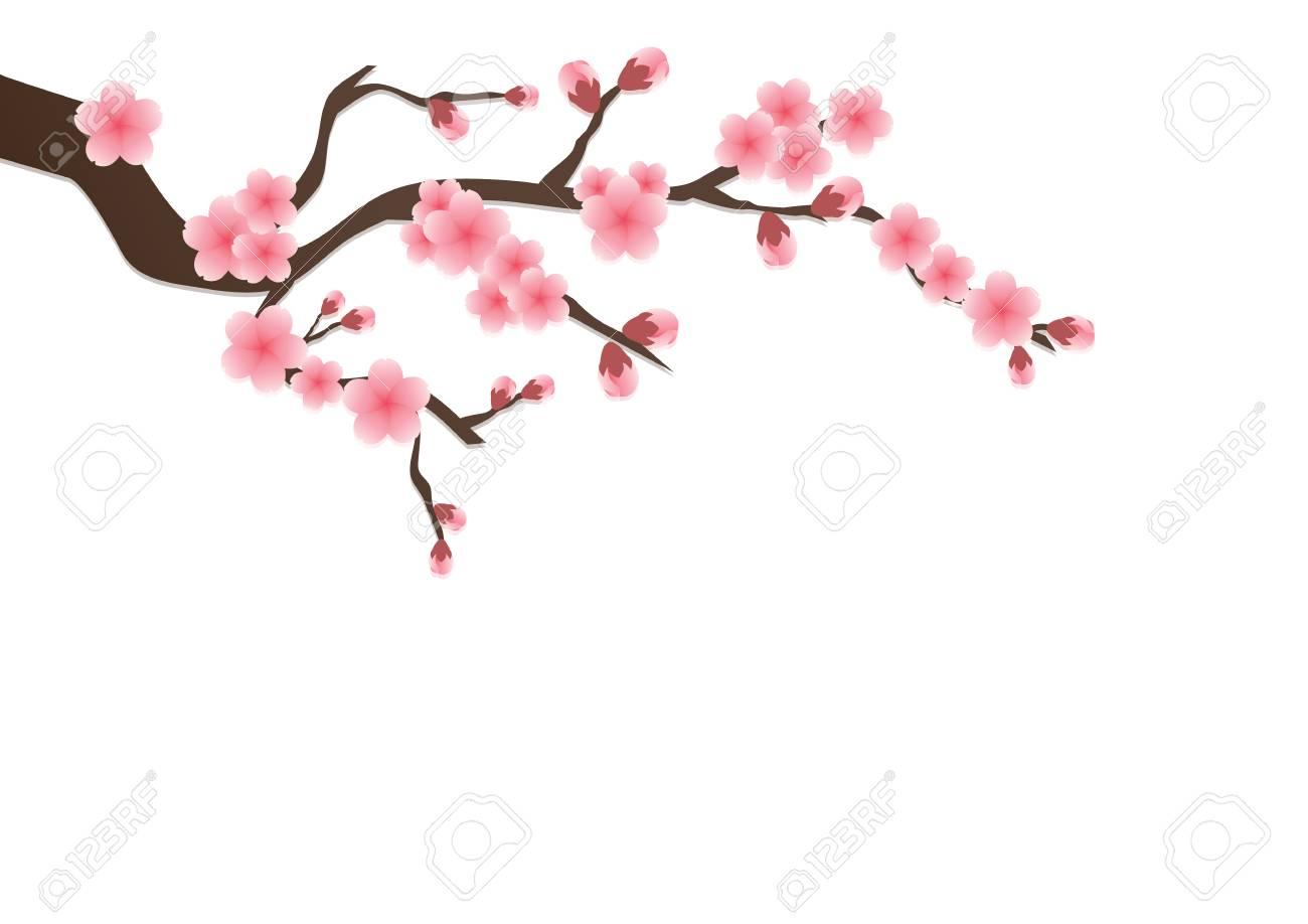 Cherry blossom flowers background sakura pink flowers isolated cherry blossom flowers background sakura pink flowers isolated background stock vector 81046404 mightylinksfo