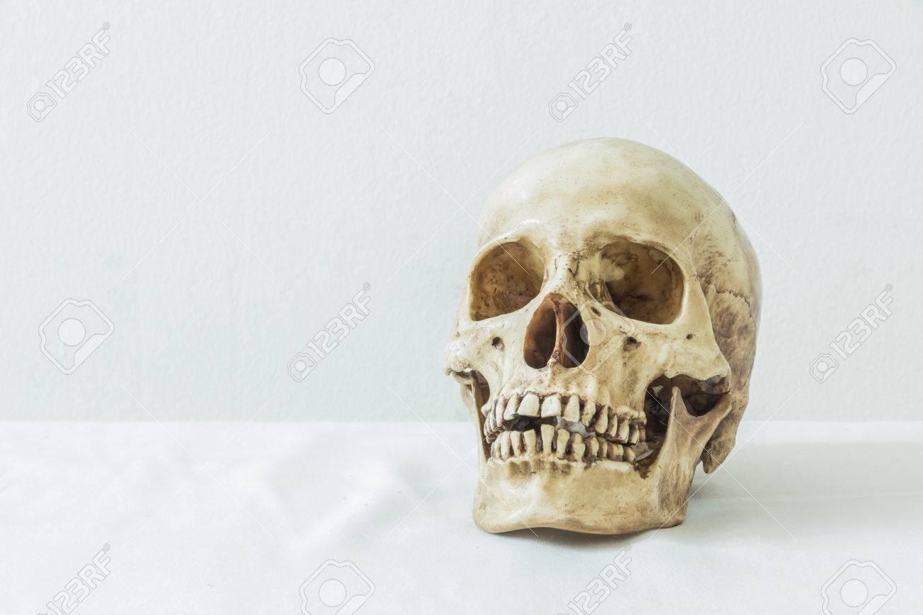 Menschlicher Schädel Auf Einem Weißen Hintergrund Für Anatomische ...