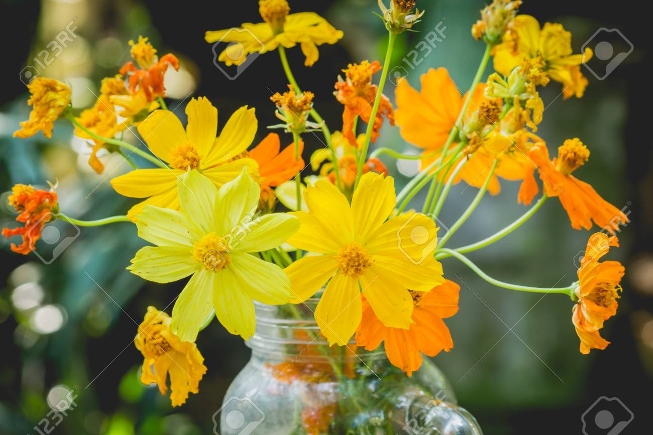 Yellow cosmos flower in glass vase as part of the decoration stock stock photo yellow cosmos flower in glass vase as part of the decoration mightylinksfo