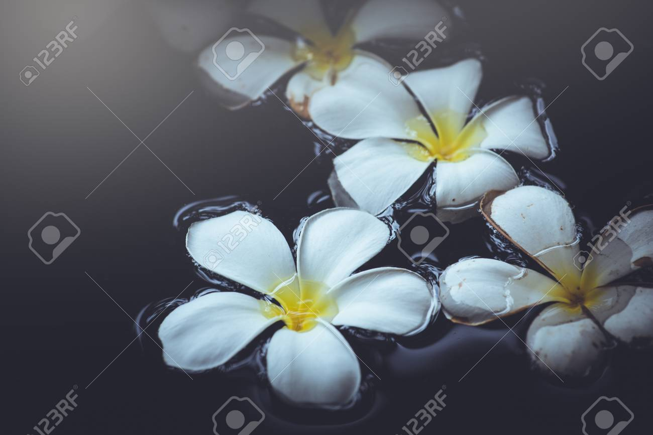 White Plumeria On Water Spa Aromatherapy Beautiful Natural Use Stock Photo Picture And Royalty Free Image Image 80439530