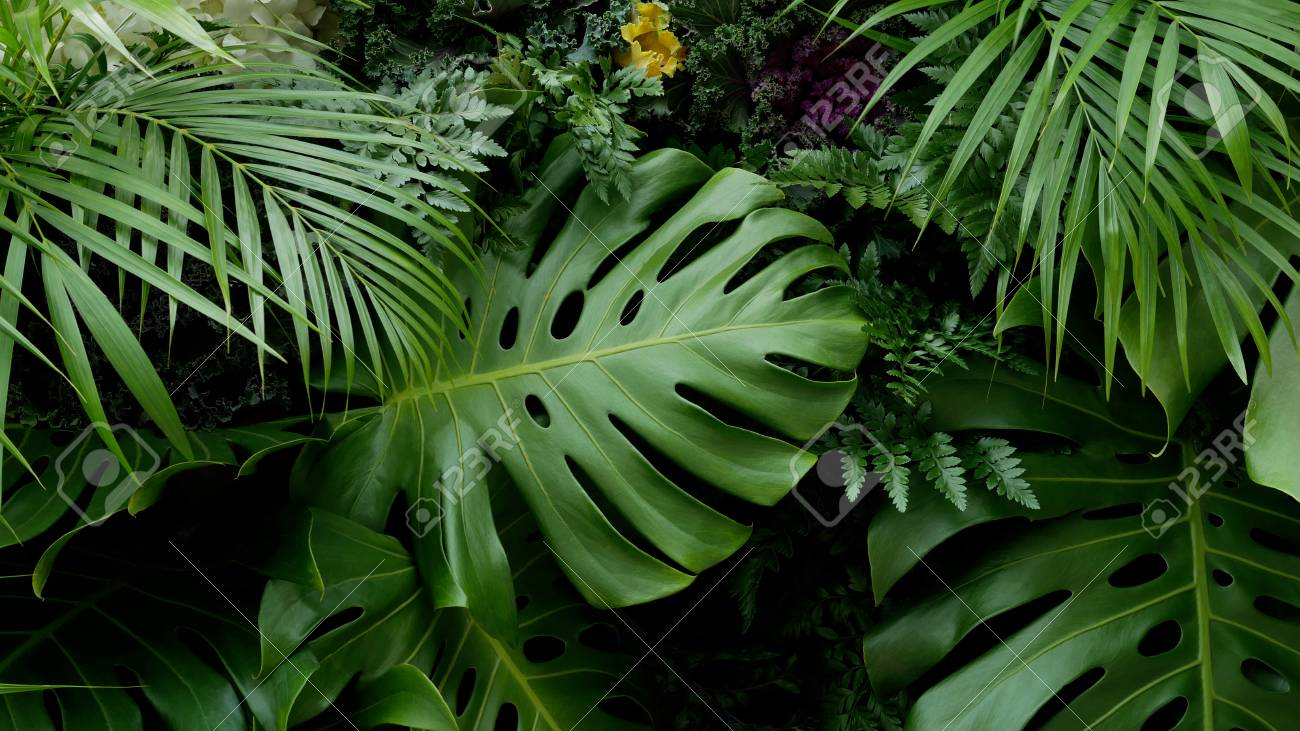 Green Tropical Leaves Monstera Palm Fern And Ornamental Plants Stock Photo Picture And Royalty Free Image Image 97595052 Your tropical leaves stock images are ready. 123rf com