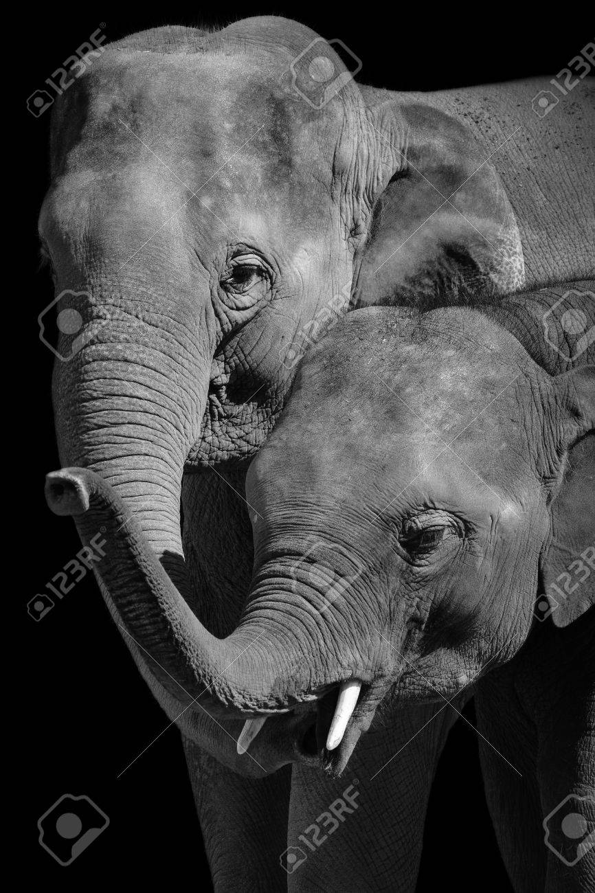 to wear - White and black baby elephant photography video