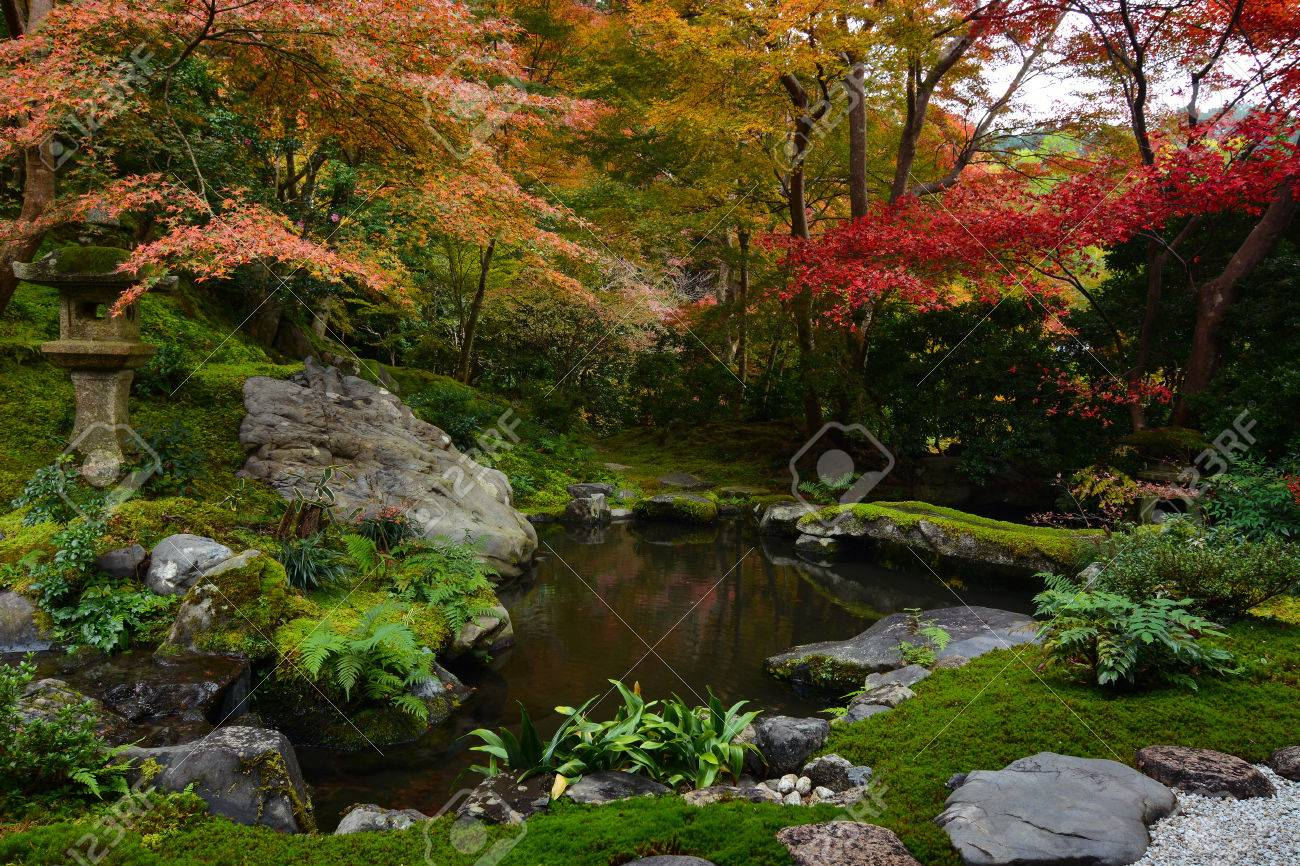 Bassin de jardin à Kyoto, au Japon de mousse verte luxuriante et rouge des  érables d\'automne