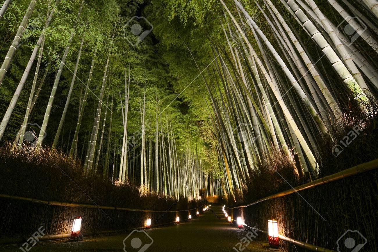 Percorso delle lanterne in una foresta di bambù per il festival di