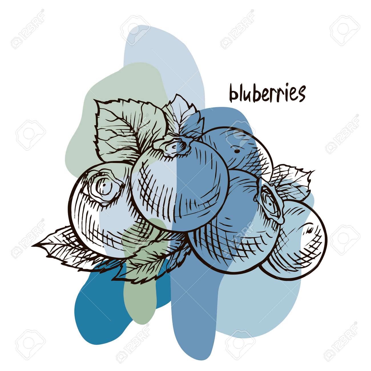Blueberries. Hand drawn illustration. Wild berries set. - 169740879