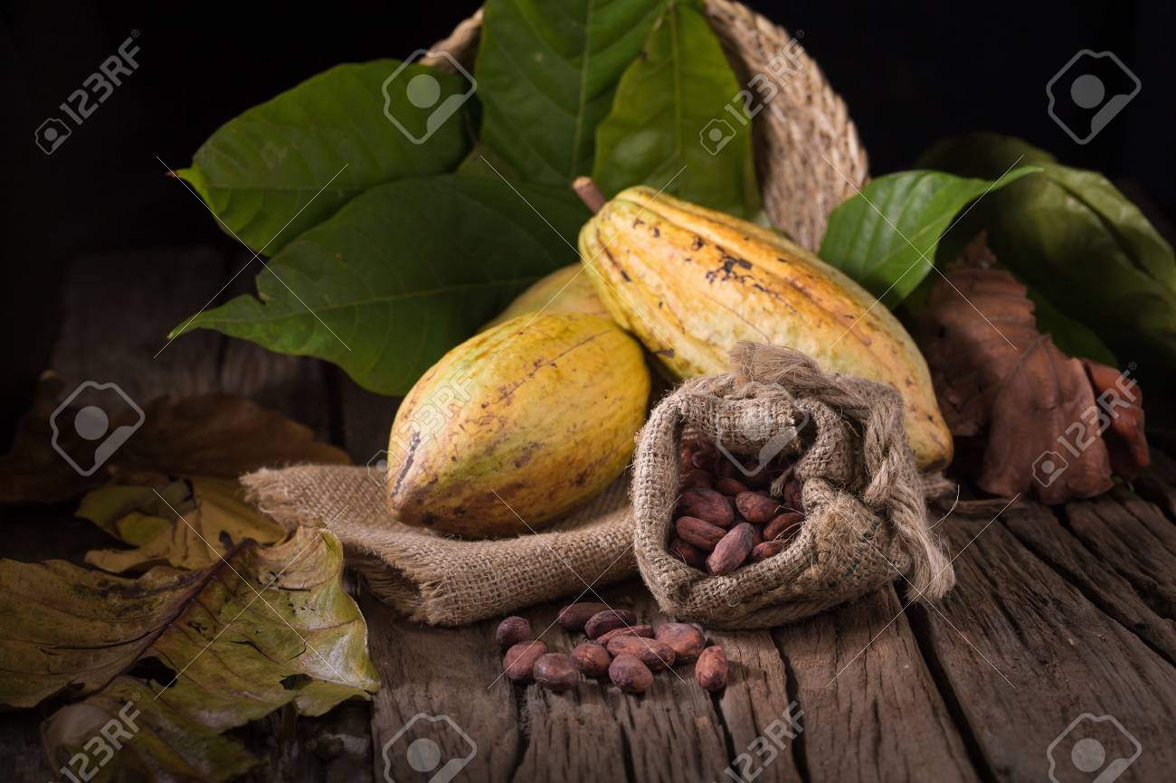 Cacao fruit, raw cacao beans, Cocoa pod on wooden background. - 76076252