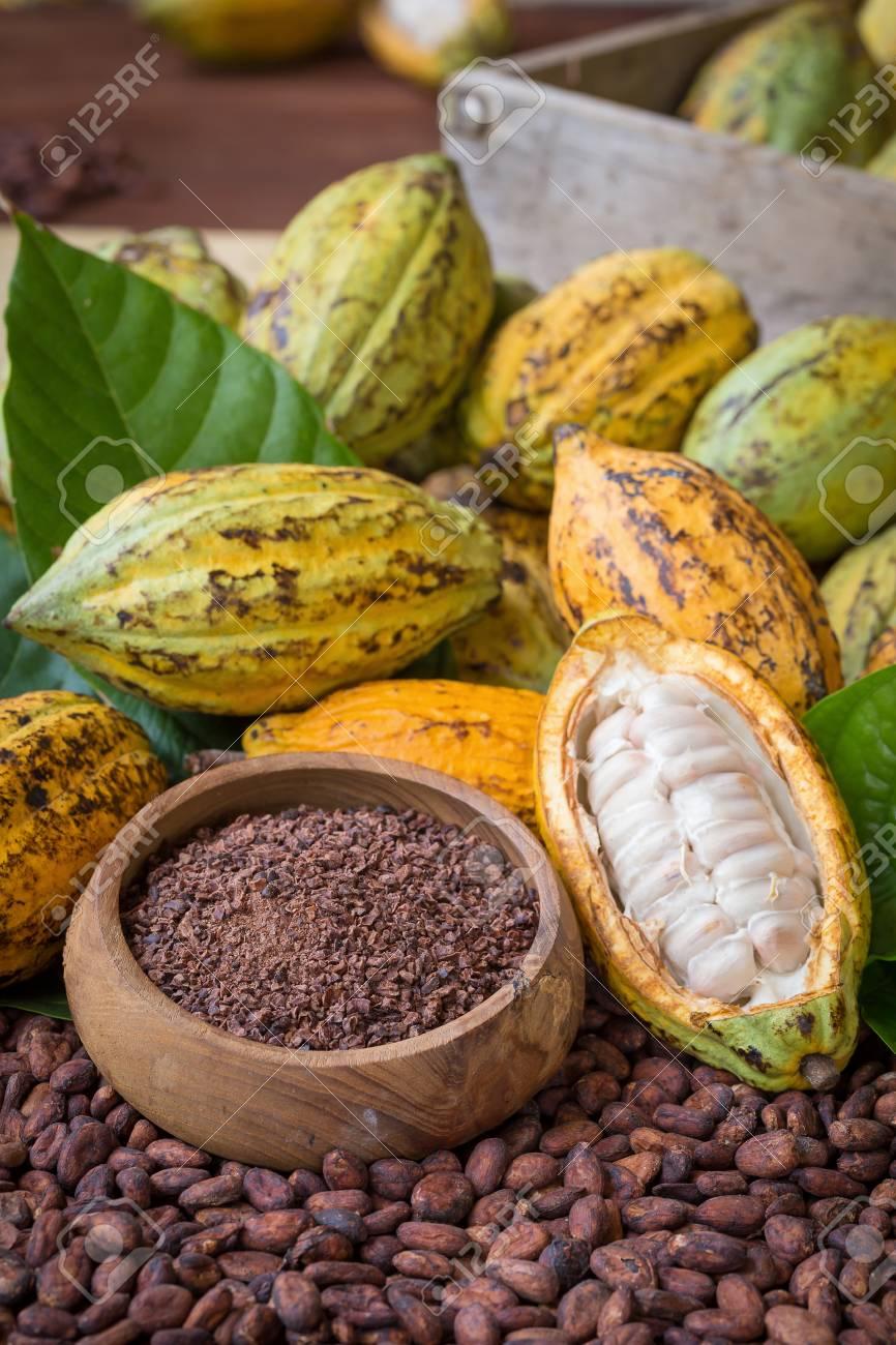 Ripe cocoa pod and nibs, cocoa beans setup background. - 77778909