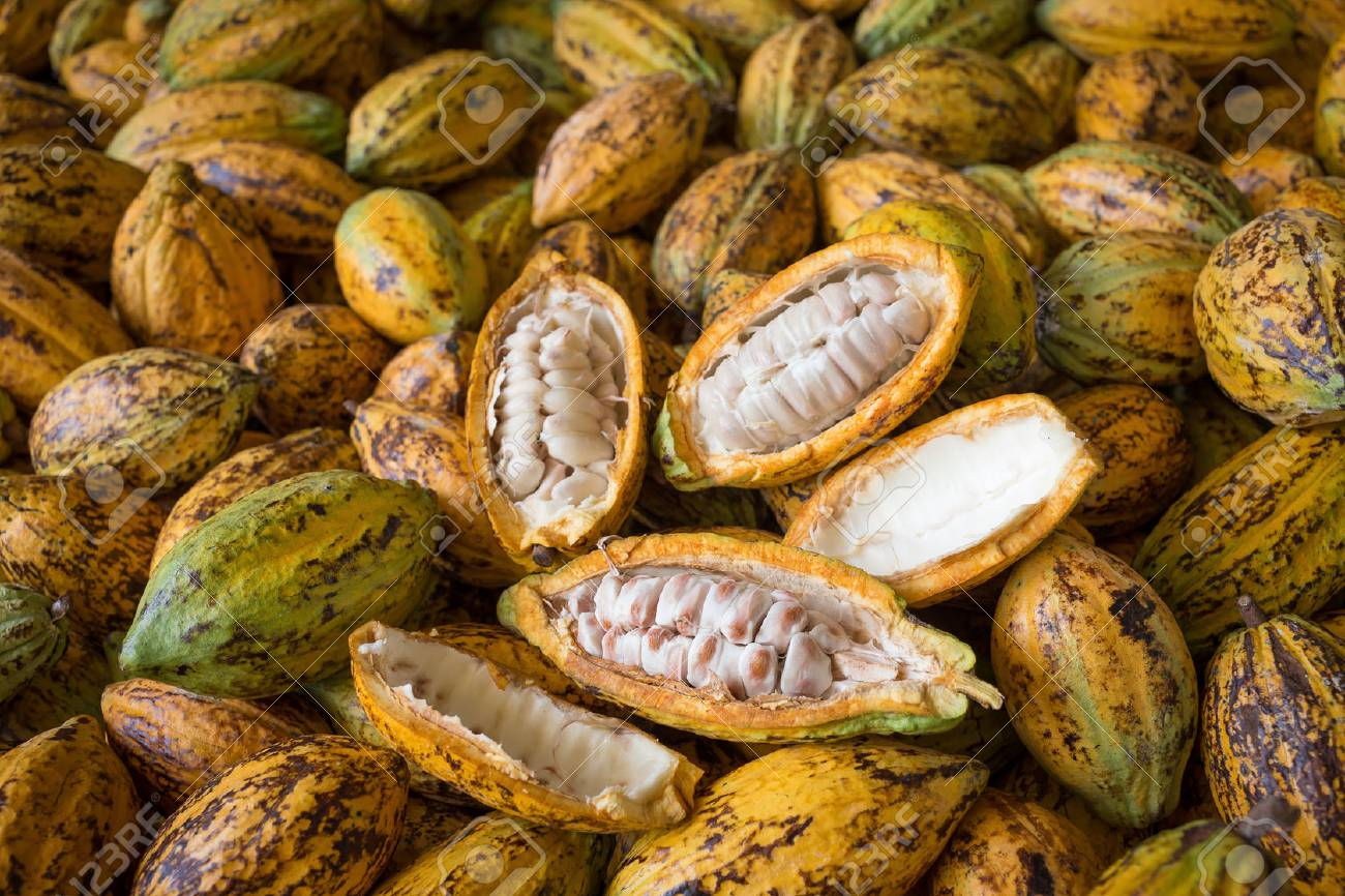 Cacao fruit, raw cacao beans, Cocoa pod background. - 79805797