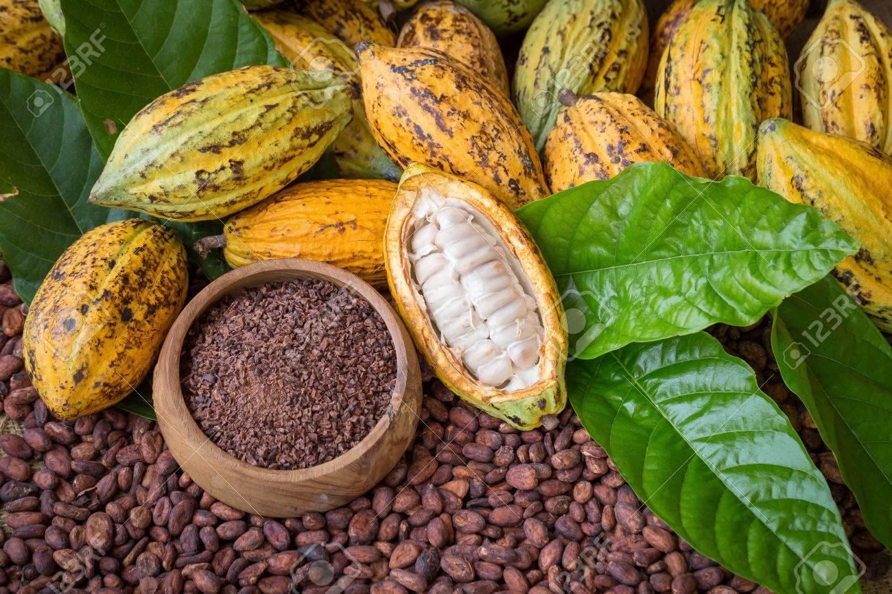 Ripe cocoa pod and nibs, cocoa beans setup background. - 81163560