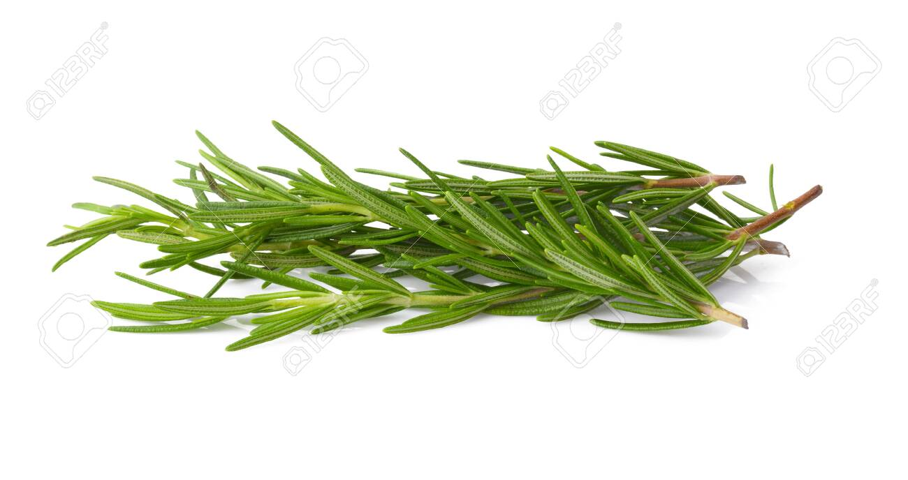 Fresh Rosemary isolated over a white background - 123127675