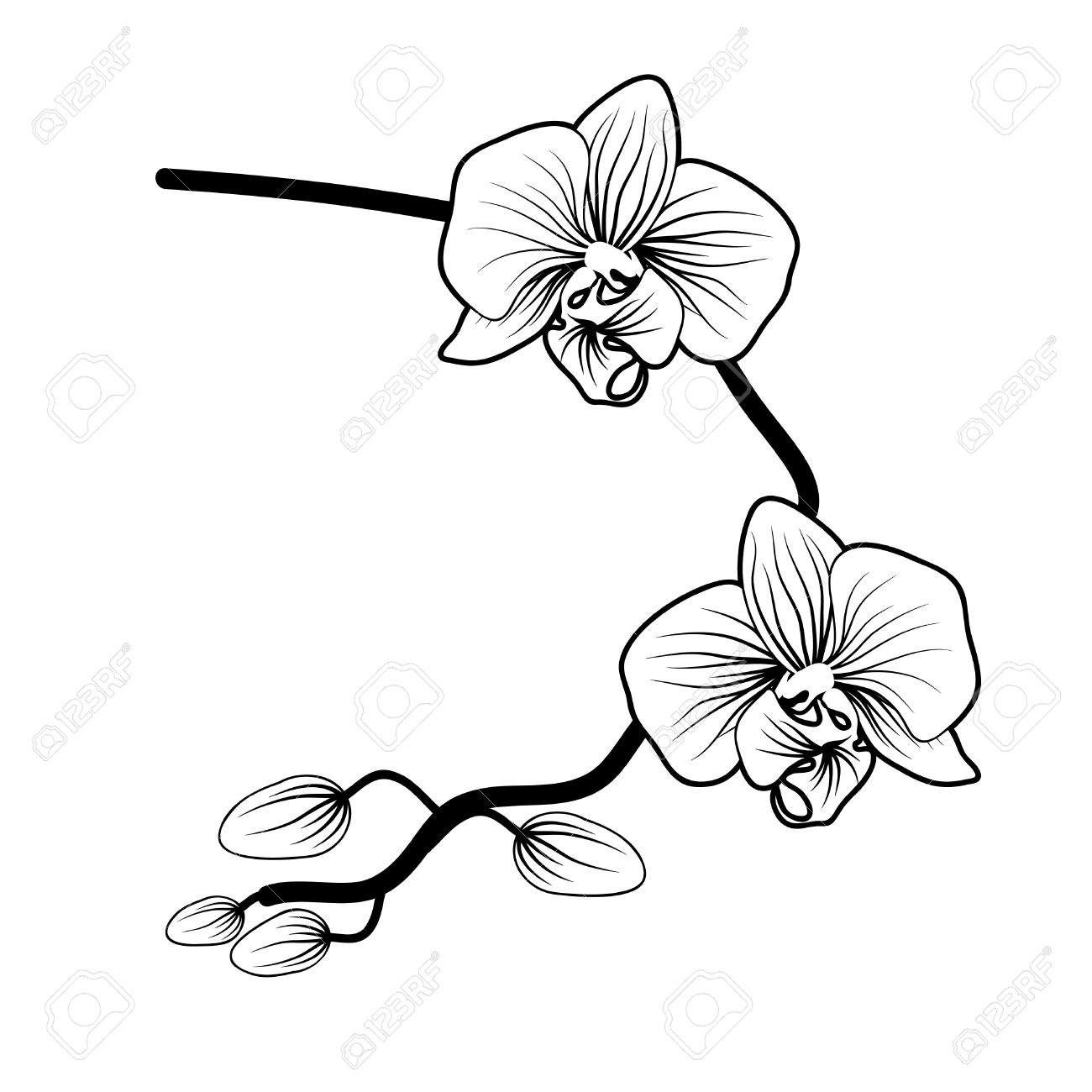 Orchid Drawing Black And White