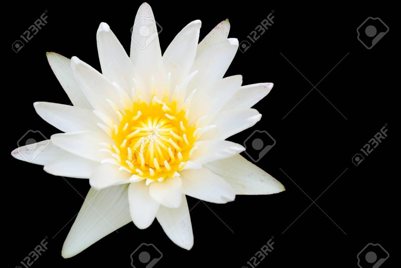 White lotus in basin Stock Photo - 15739145