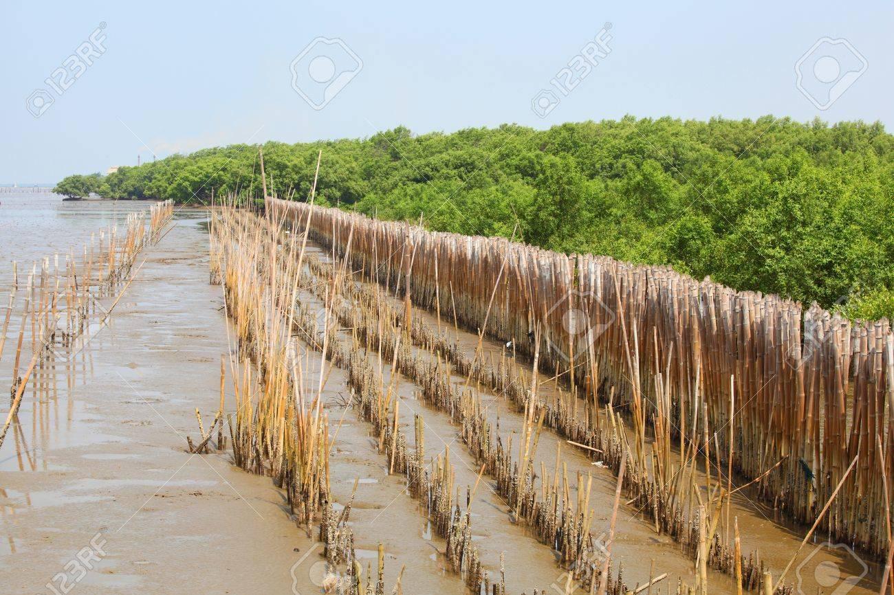 Barrière En Bambou Pour Protéger La Forêt Banque D\'Images Et Photos ...