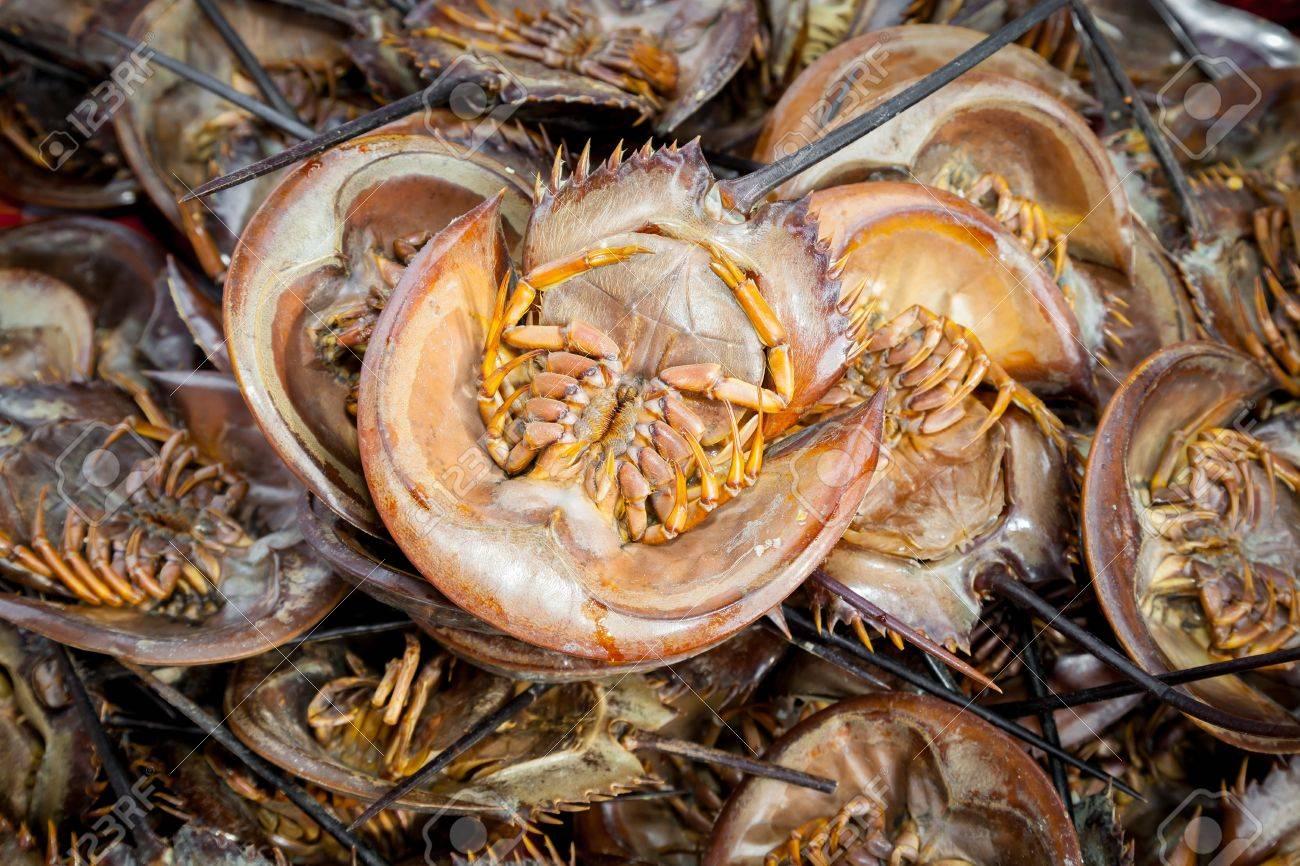 Roasted Mangrove horseshoe crab - 20378594