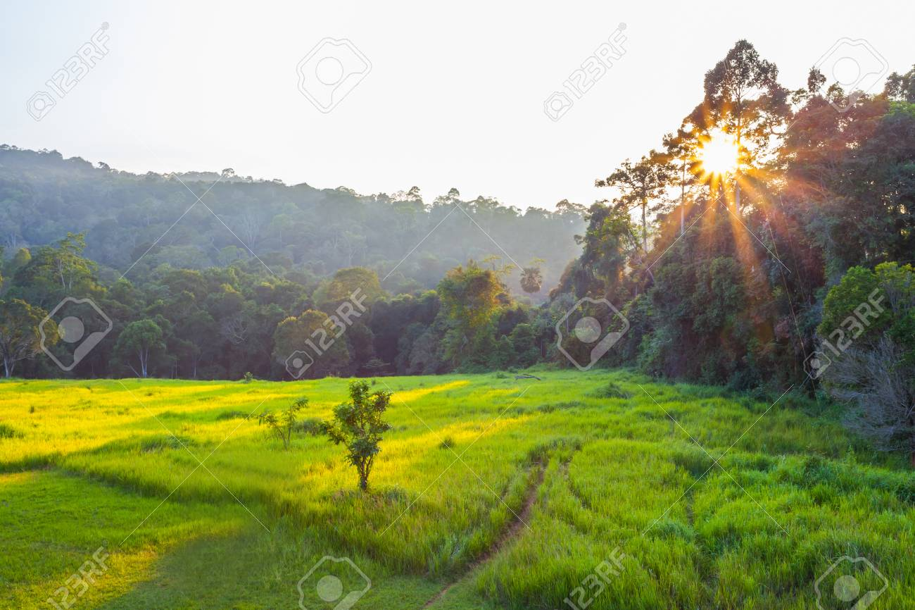 The dawn at Khao Yai national park for background use - 23344378