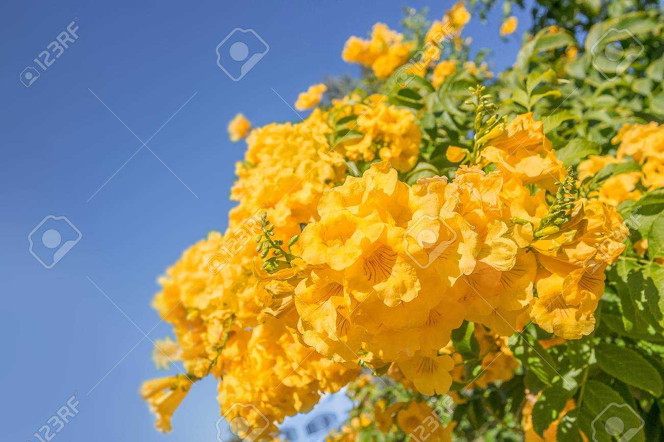 Yellow flowers against the blue sky background stock photo picture stock photo yellow flowers against the blue sky background mightylinksfo