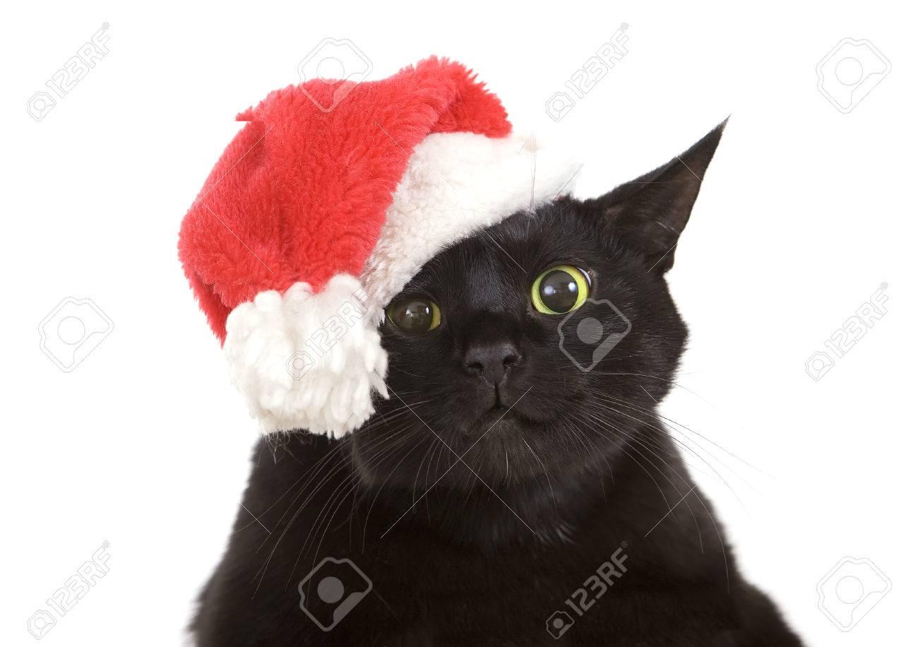 Cat Christmas.Funny Black Cat Santa Cute Christmas Cat Christmas Pet With