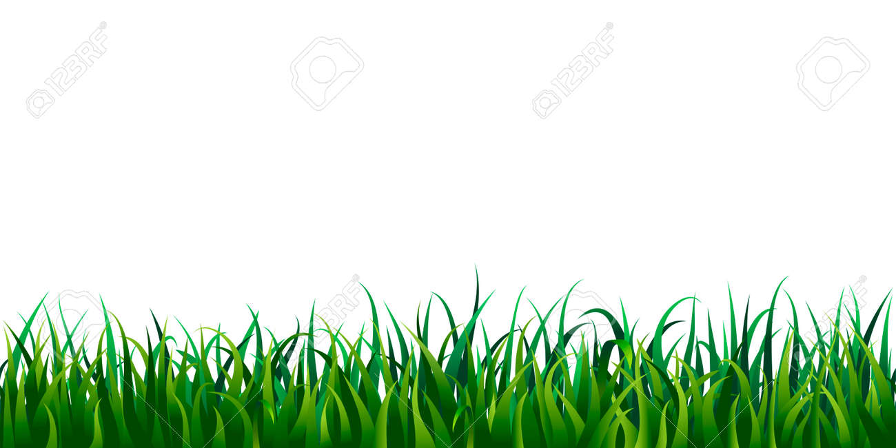 Seamless grass border isolated on white or transparent background. vector illustration of fresh realistic green lawn. endless horizontal grass frame. bright meadow panorama. spring, summertime design - 147155398
