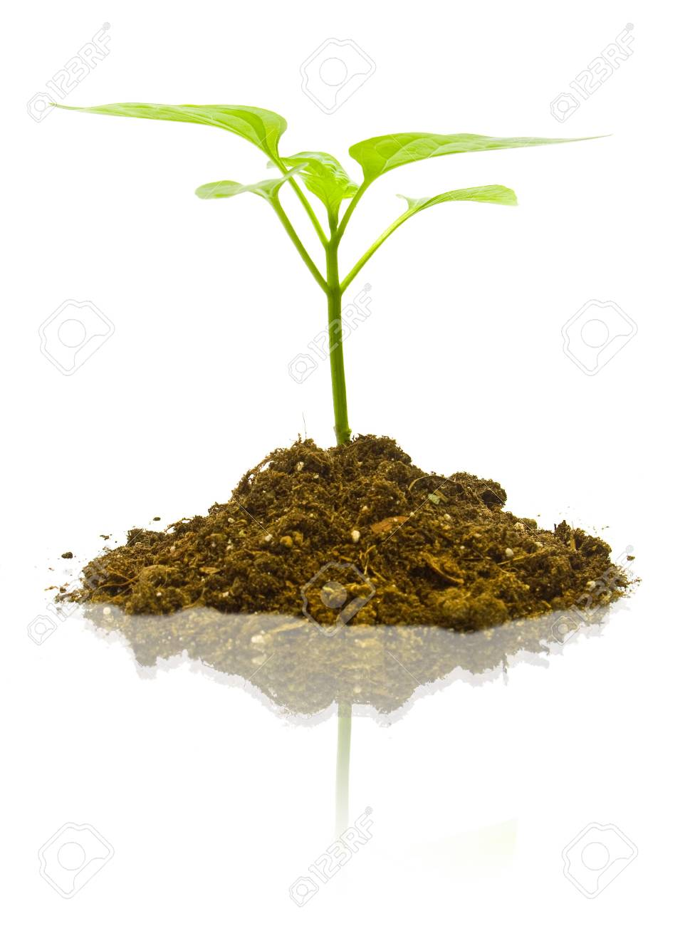 Young plant on the white backgrounds Stock Photo - 7318525