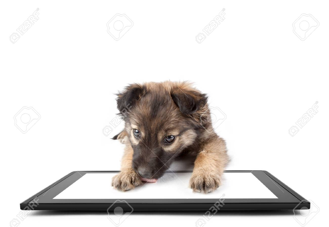 One tablet on the white backgrounds and dog on the tablet stock one tablet on the white backgrounds and dog on the tablet stock photo 36174456 voltagebd Choice Image