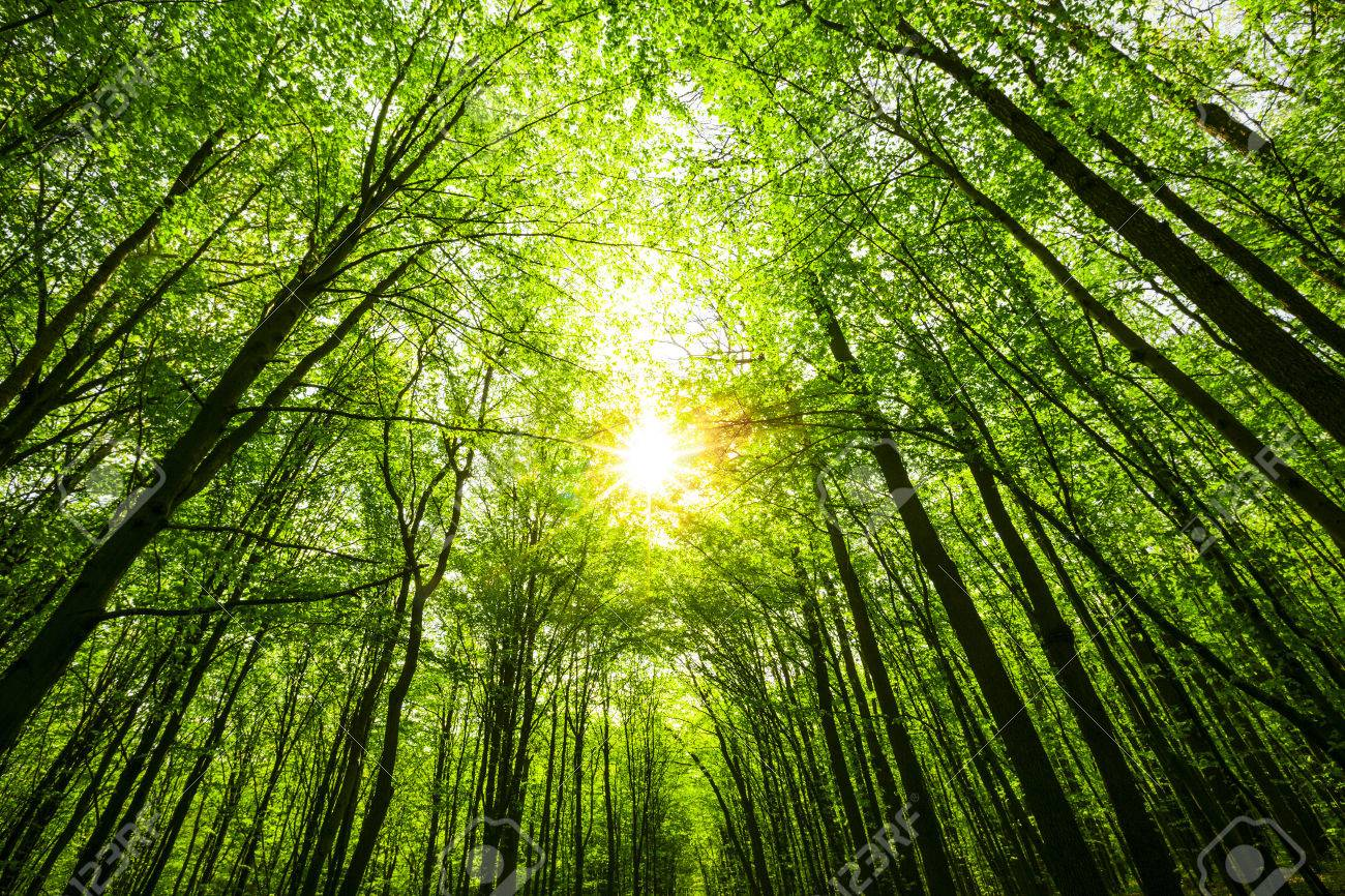 spring forest trees. nature green wood sunlight backgrounds. sky - 55215766
