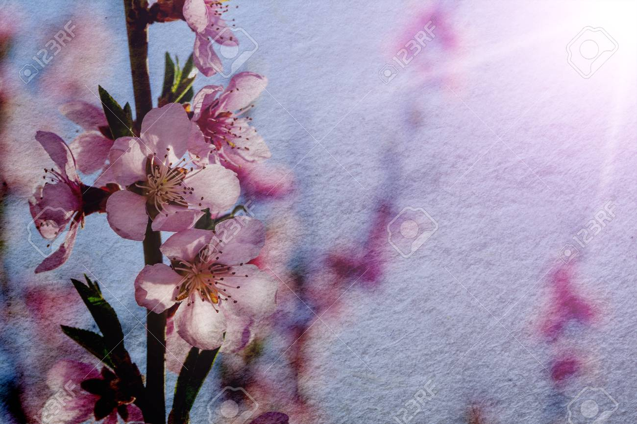 A Vintage Spring Pink Flowers Backgrounds Stock Photo Picture And