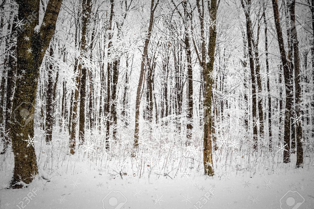 Winter nature backgrounds Desktop Stock Photo Winter Forest Trees Nature Snow Wood Backgrounds 123rfcom Winter Forest Trees Nature Snow Wood Backgrounds Stock Photo