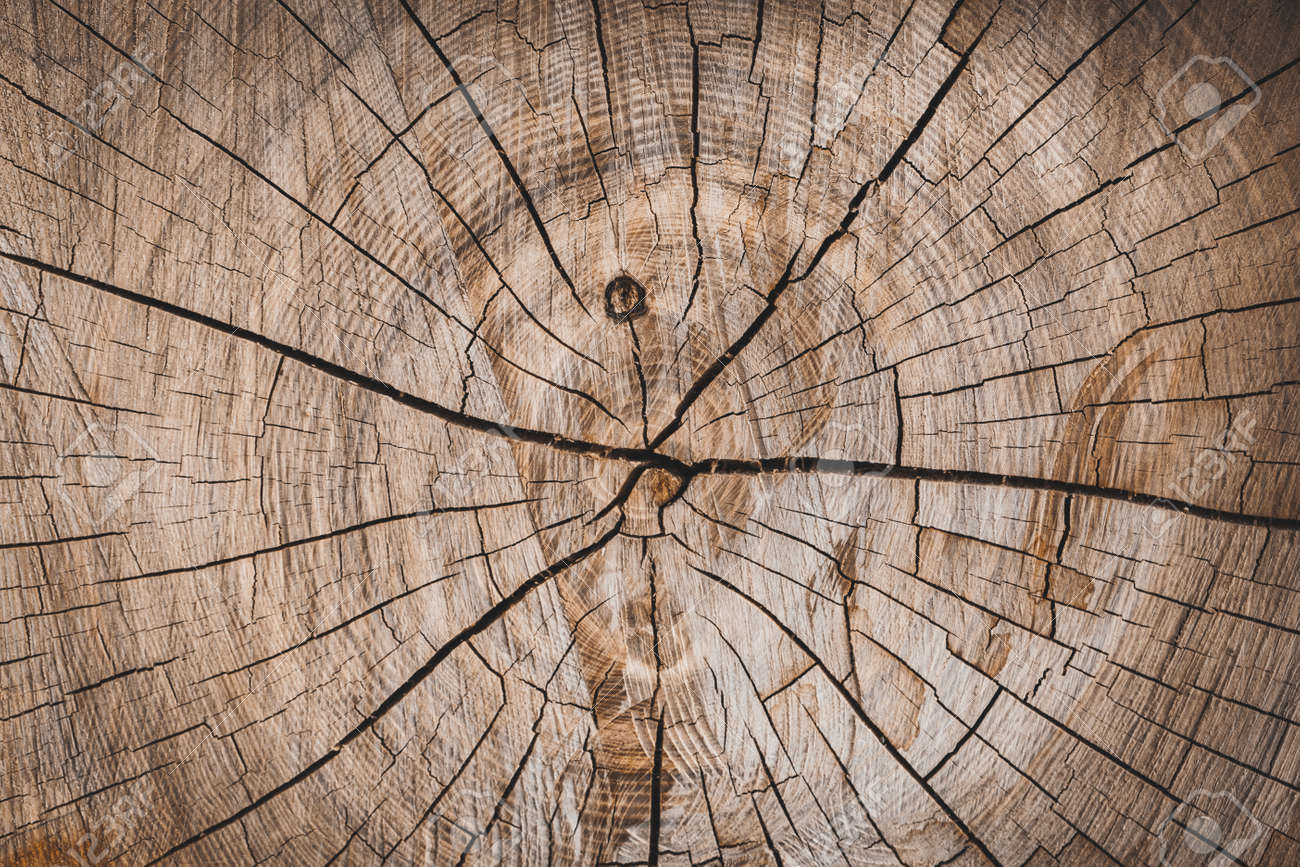 background of a wooden stump - 146679139