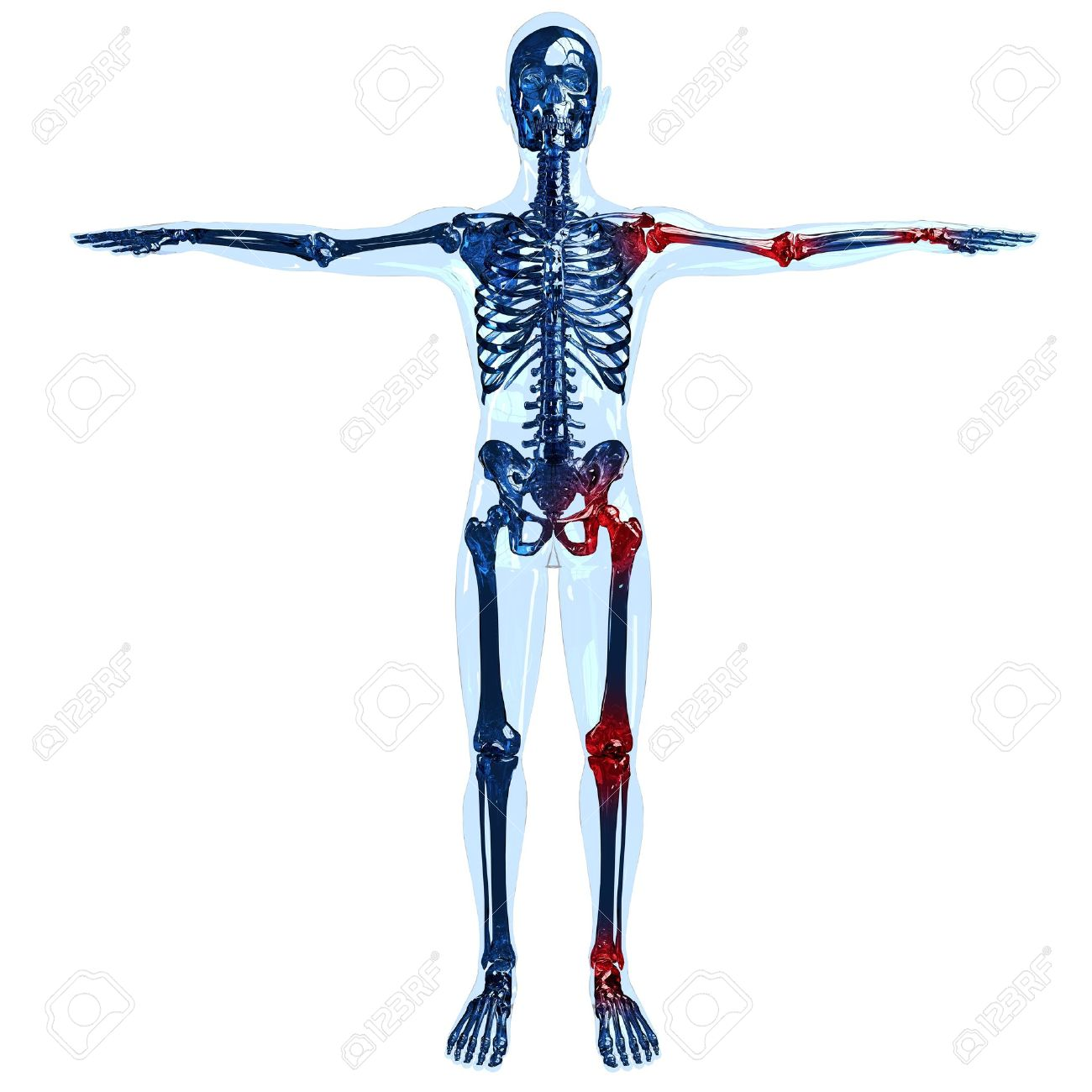 Full Human Skeleton And Transparent Body Illustration In 3d With