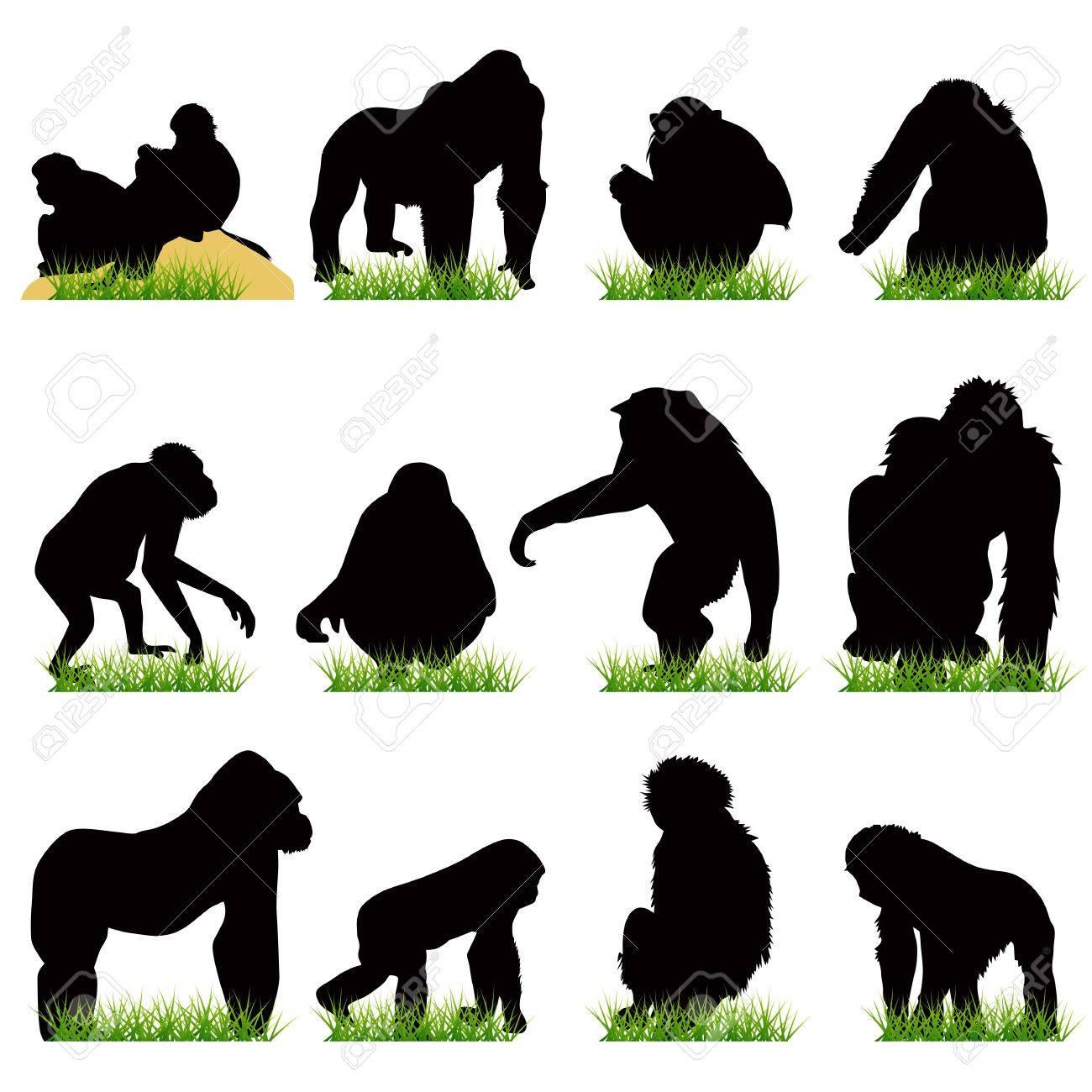 set  gorilla  silhouet...