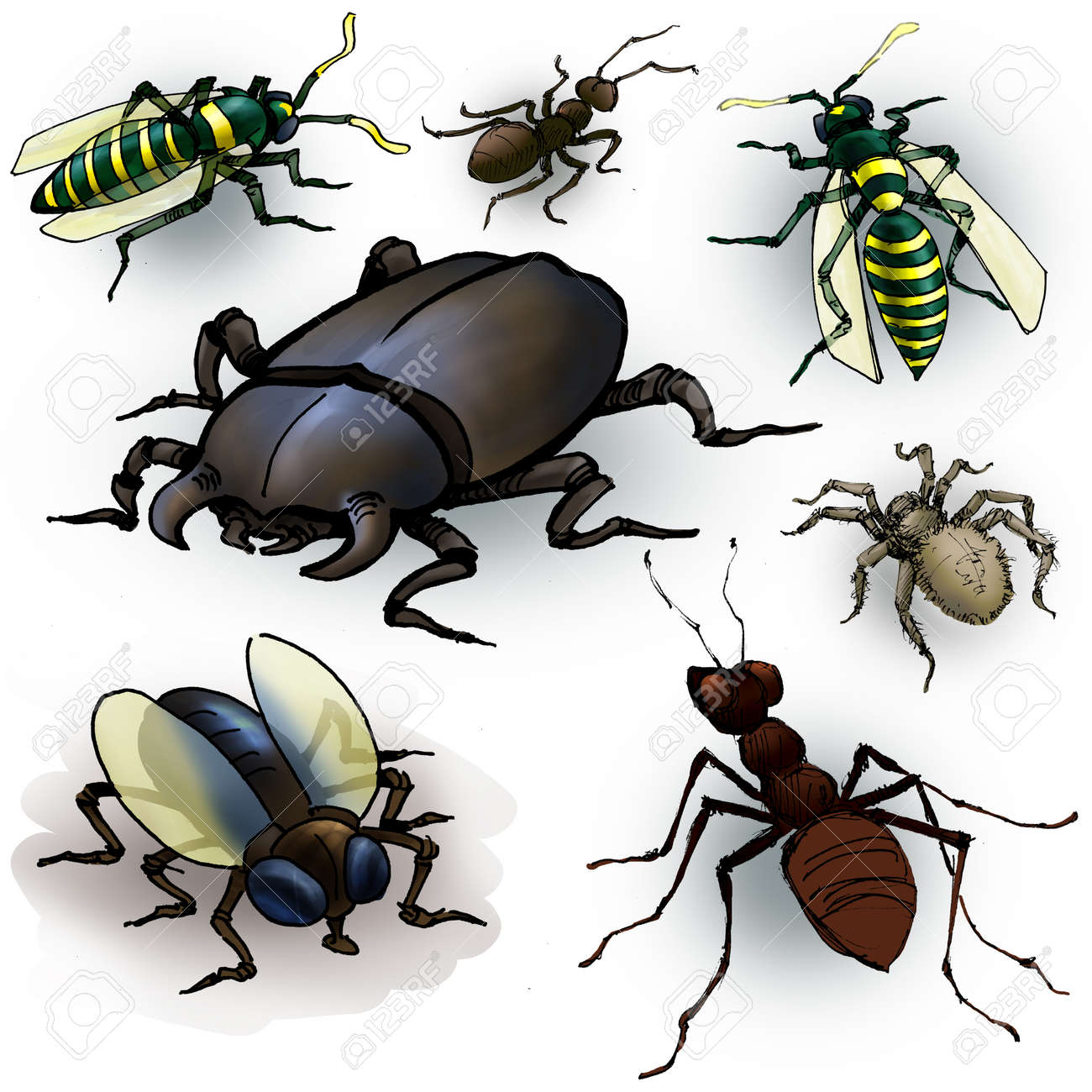 drawing of a few insects spider ant beetle fly and wasps stock