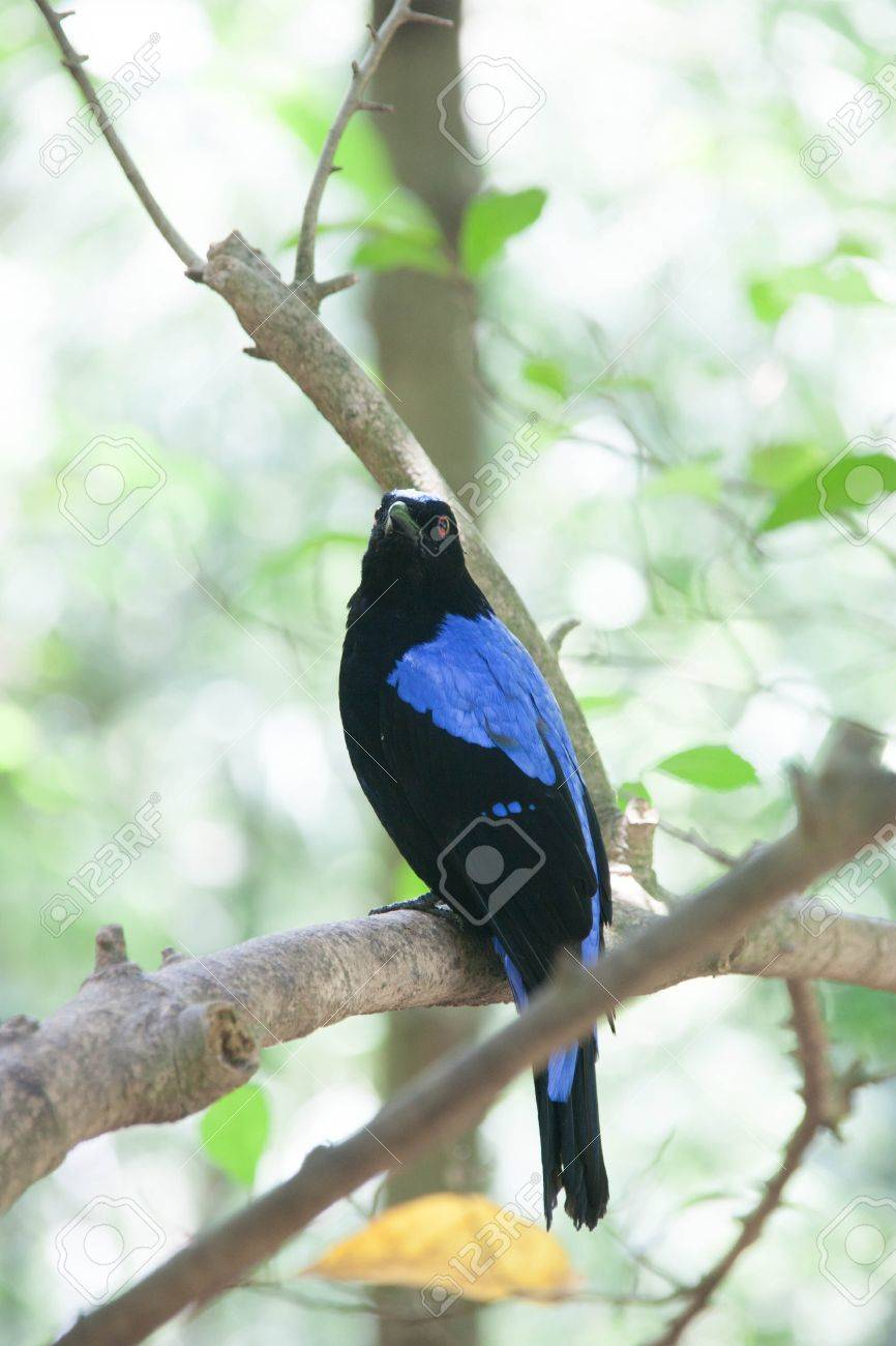 Most Beautiful Animals Is The Many Small Birds Species Diversity