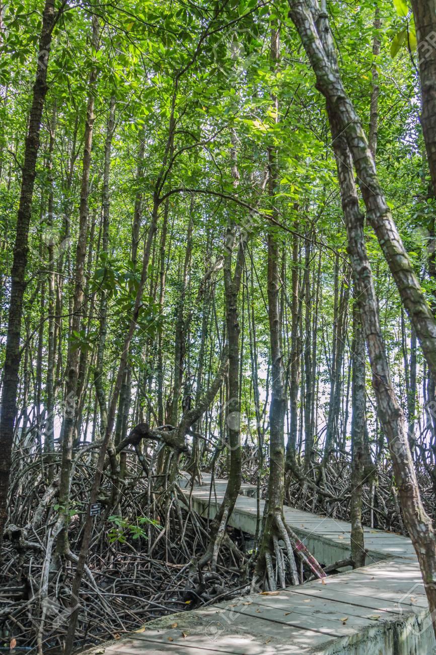 高潮 の 森林