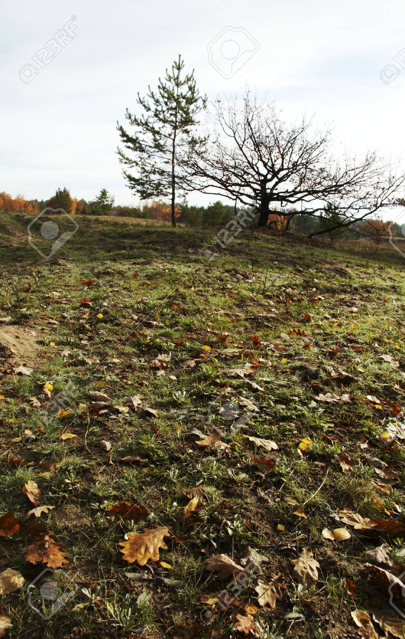 leaves and tree on the autumn grassland Stock Photo - 604018