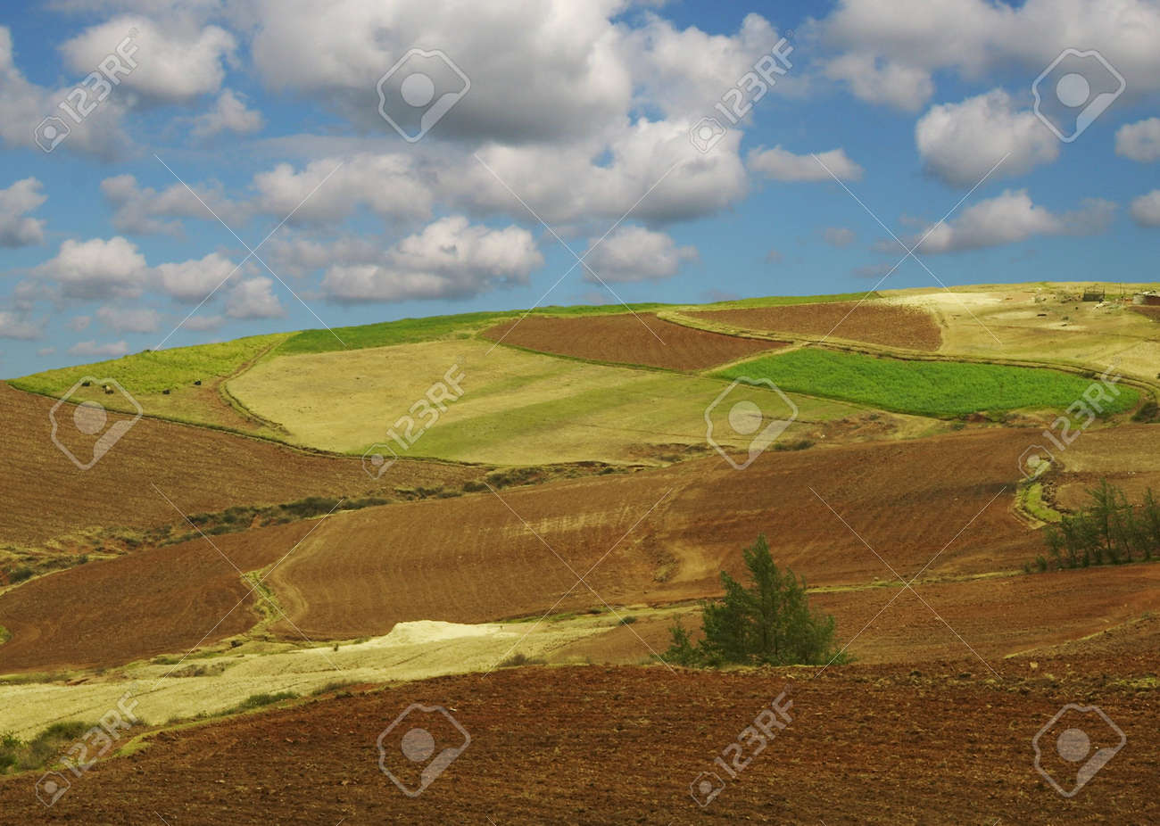 Colorful fields - Landscape green grass, blue sky and white clouds Stock Photo - 655128