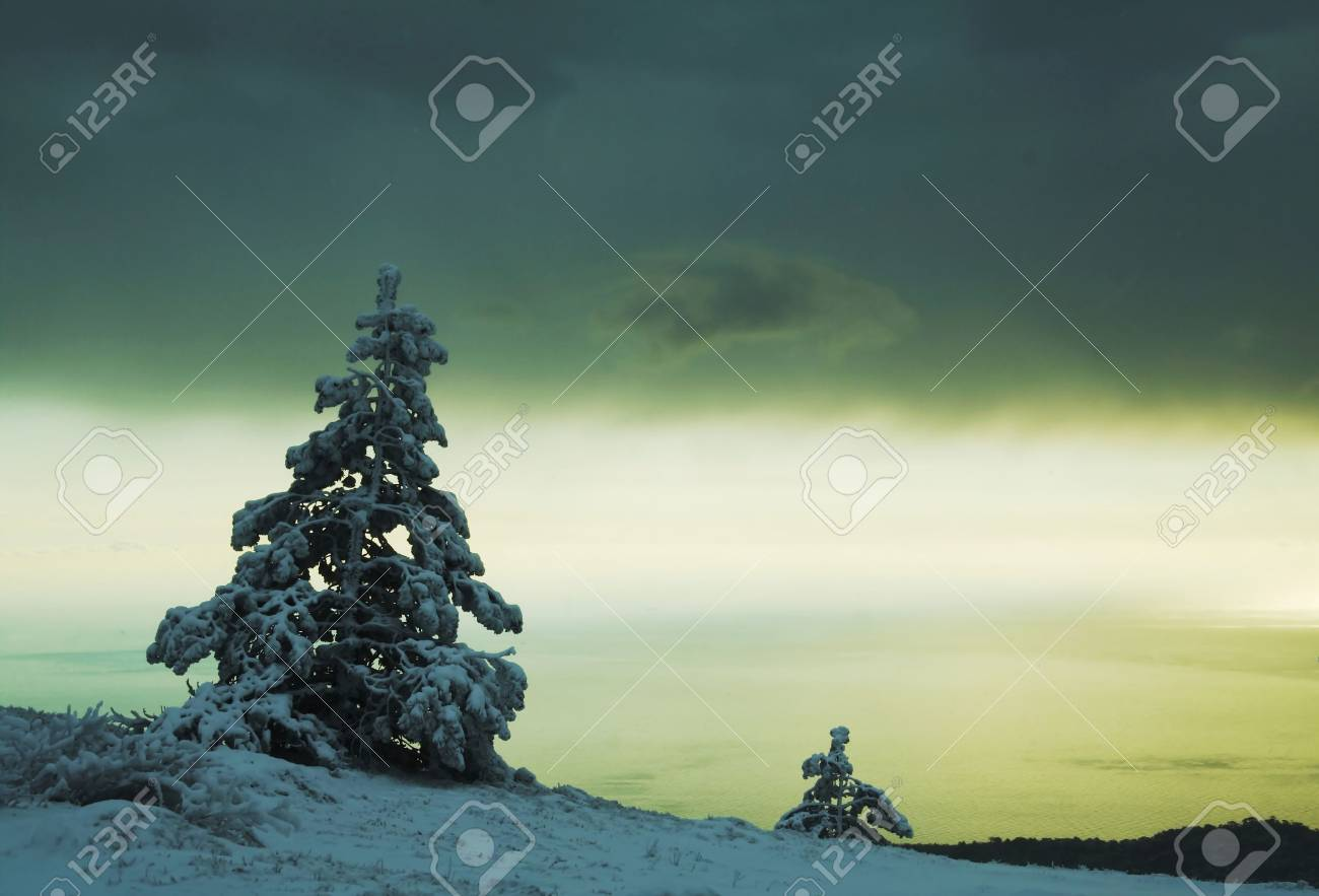 Frozen trees in the mountain in Crimea Stock Photo - 722092