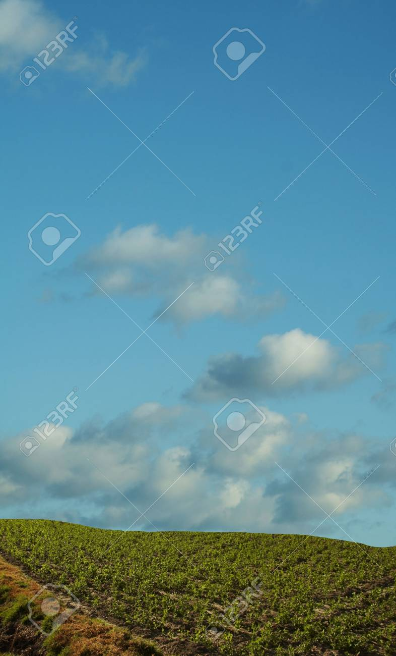 Colorful fields - Landscape  grass, blue sky and white clouds Stock Photo - 785088