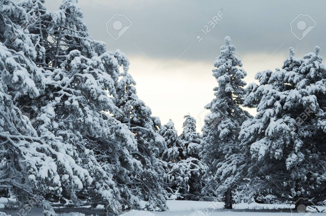 Winter forest in Crimean mountains Stock Photo - 1105301