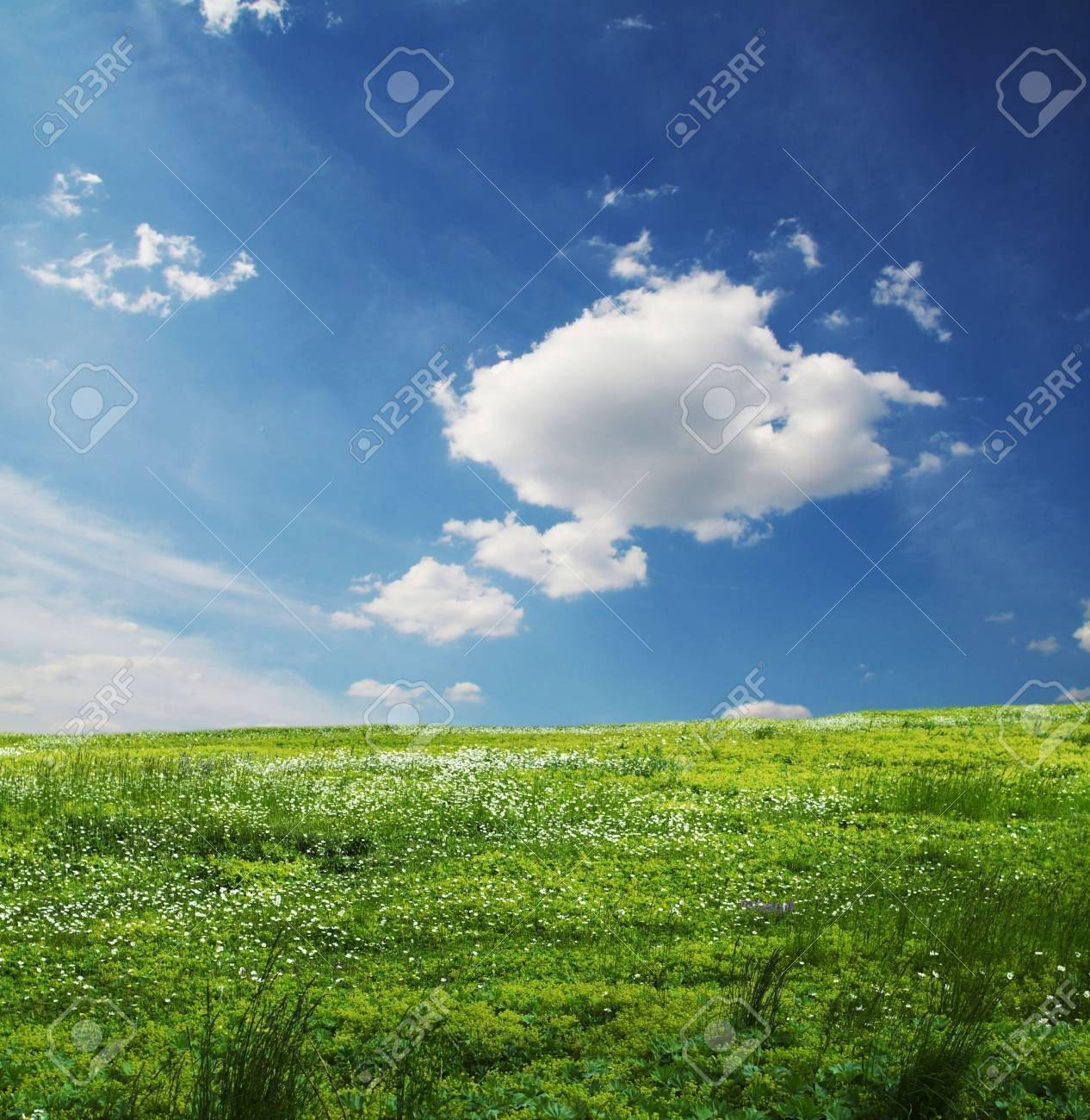 Green meadow and sky in the morning Stock Photo - 1202060