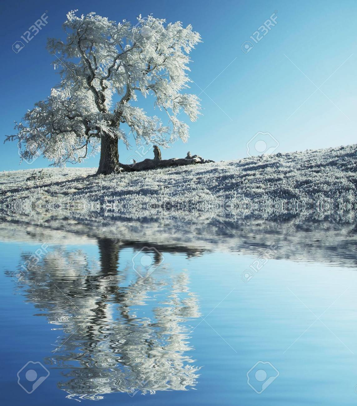 Alone frozen tree Stock Photo - 1737498