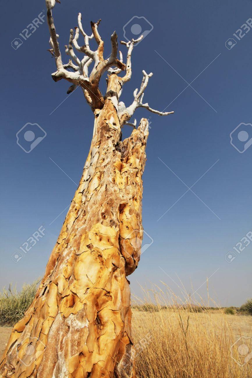 African tree Stock Photo - 5658875