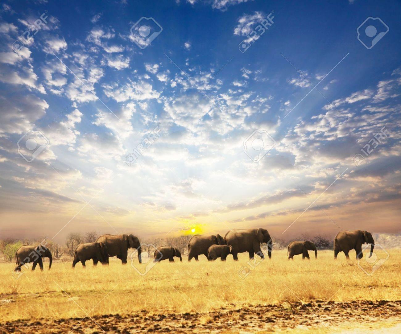 Elephant Stock Photo - 5658861