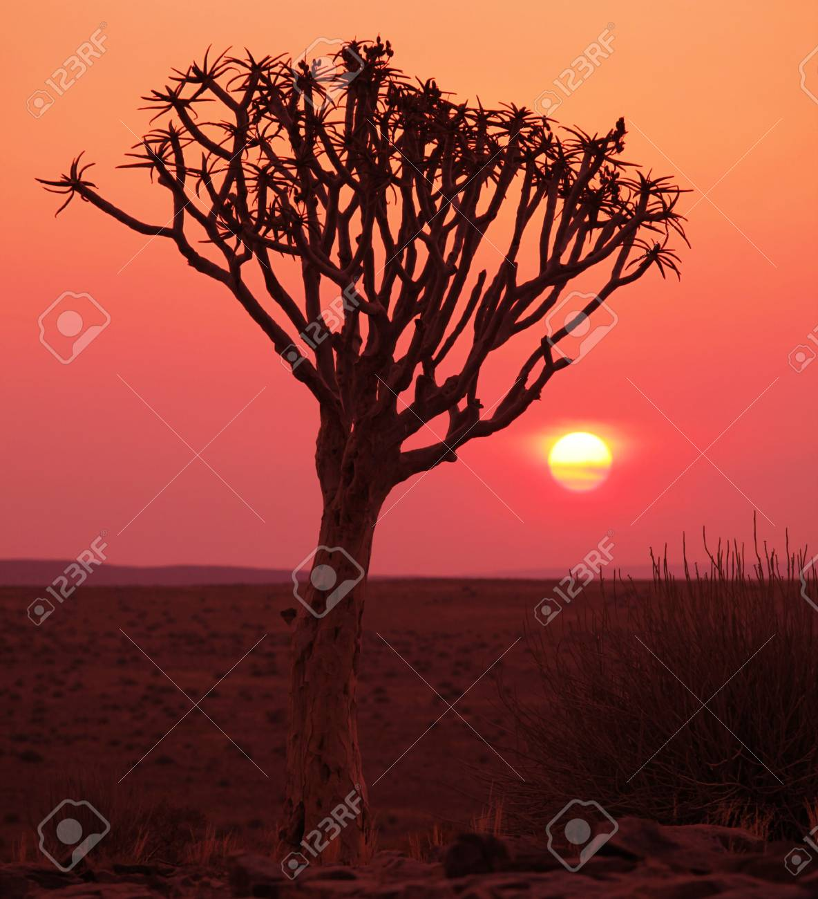 African tree Stock Photo - 6110627