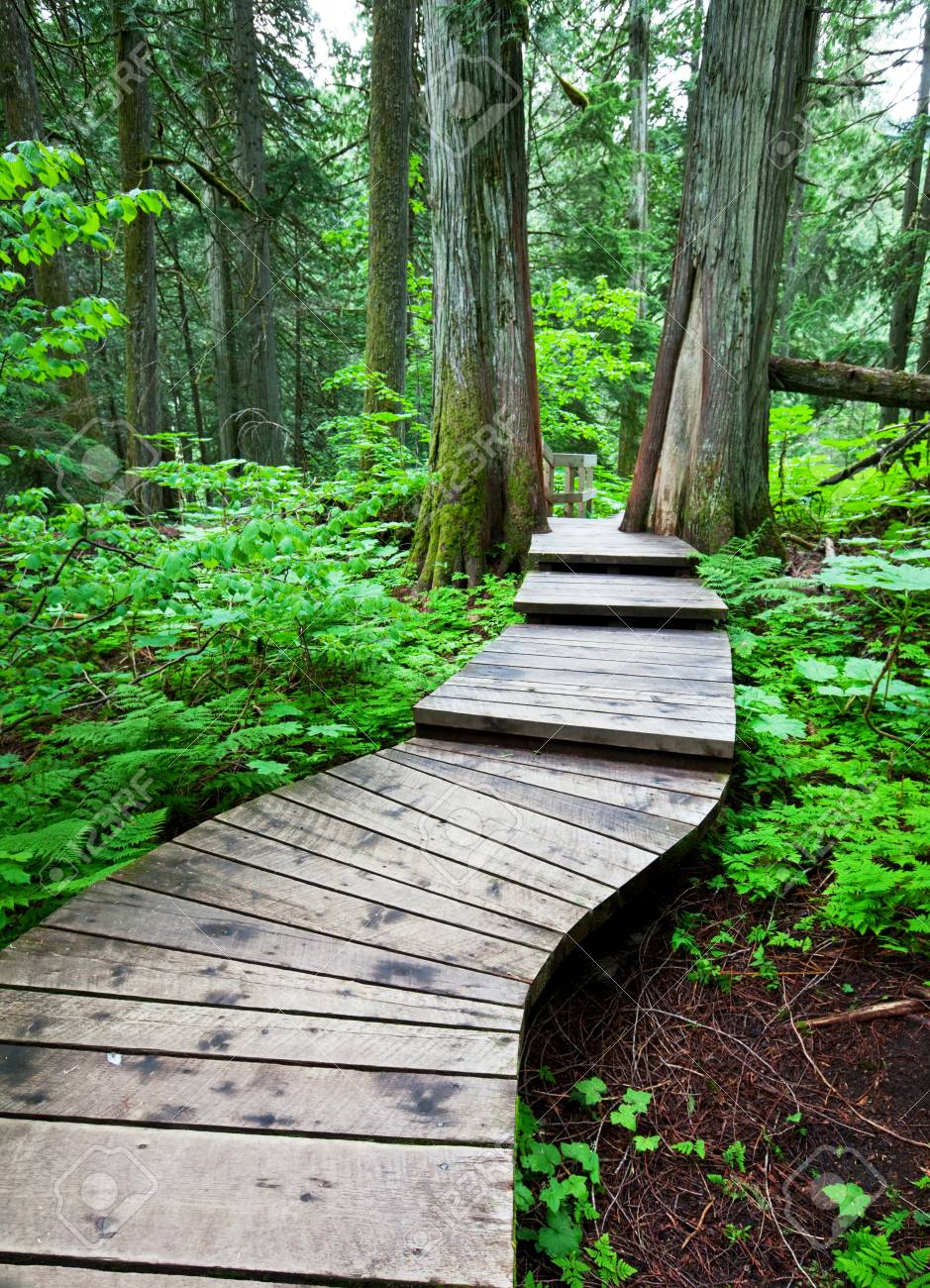 boardwalk in forest Stock Photo - 7277879