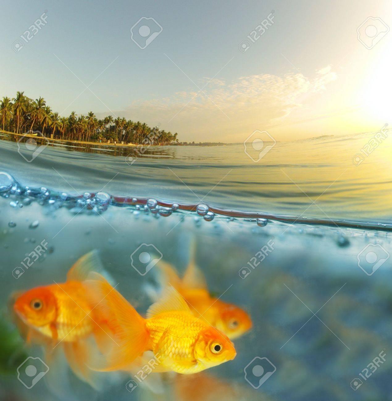 tropical fish Stock Photo - 16948889