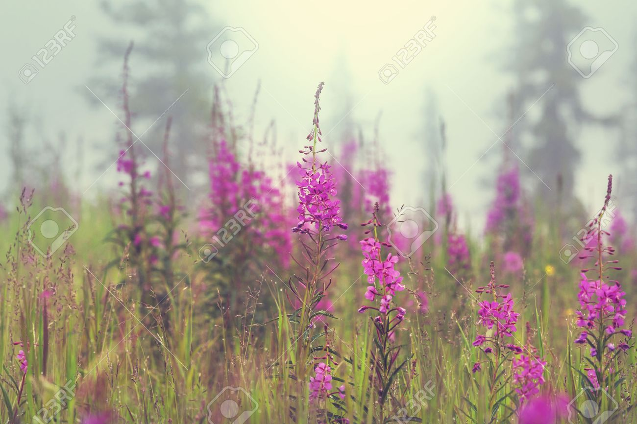 Summer flowers on the foggy meadow Stock Photo - 43988610