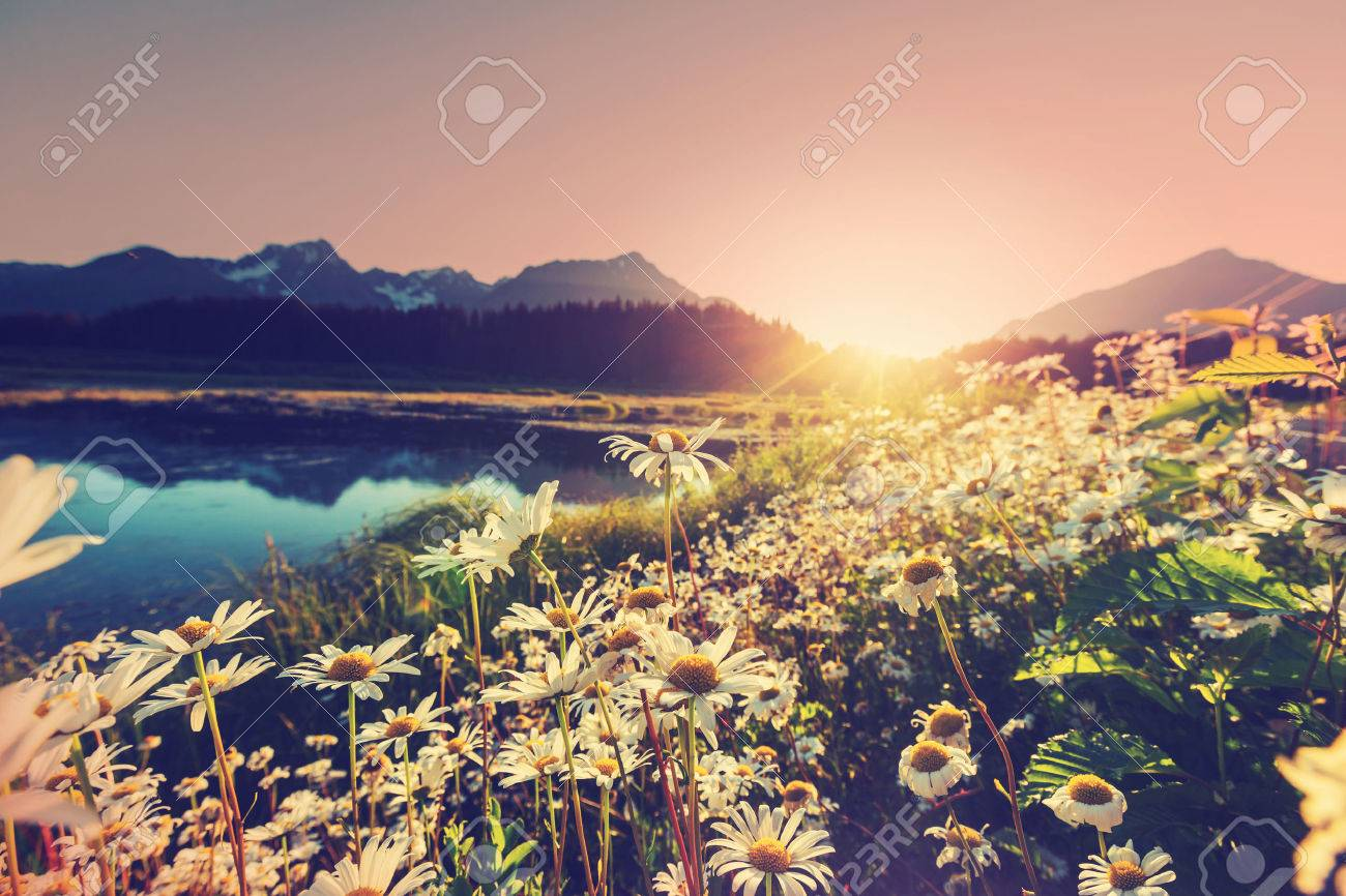 Mountain meadow in sunny day Stock Photo - 45500521