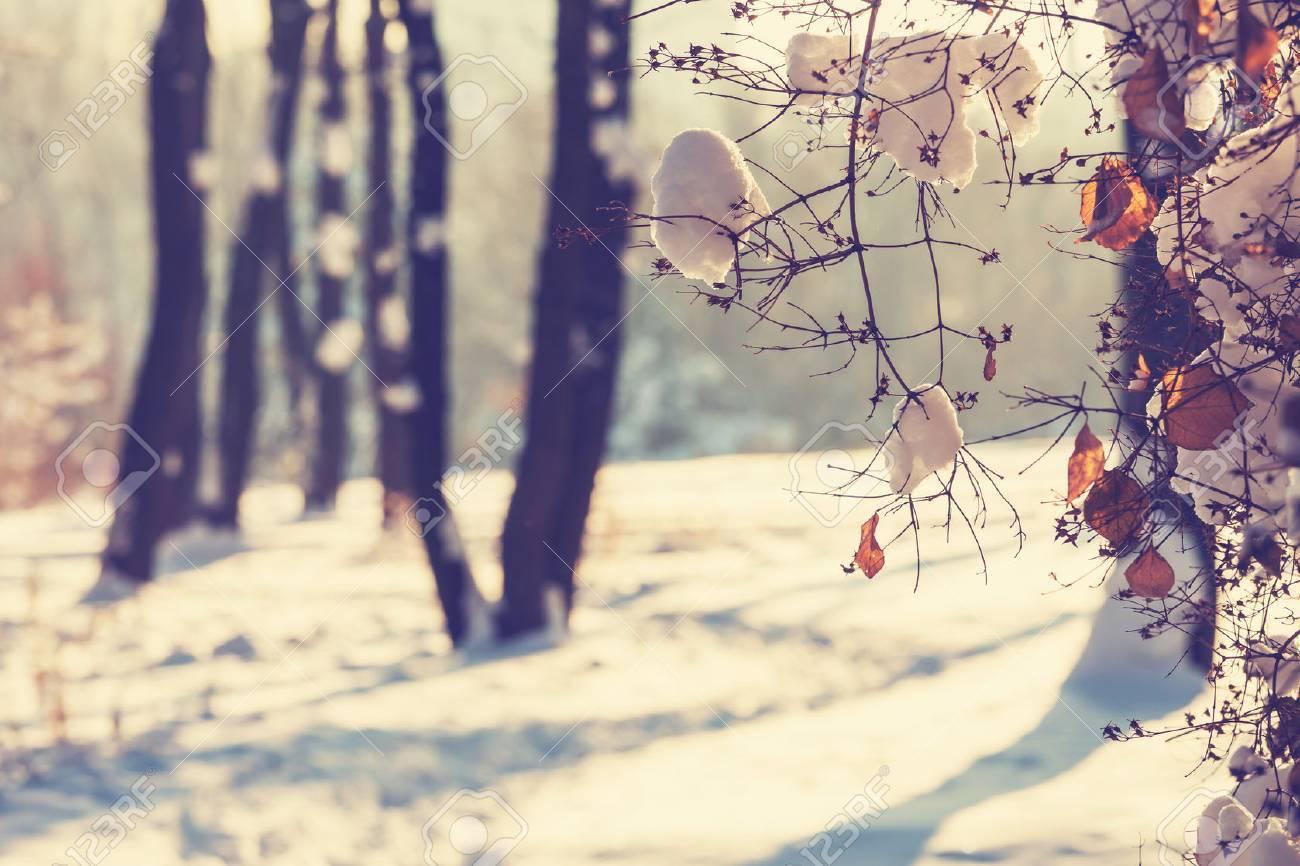 Winter scene Stock Photo - 45501295