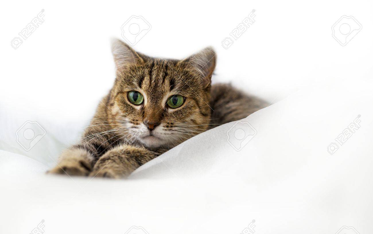 Cat Stock Photo - 45517374